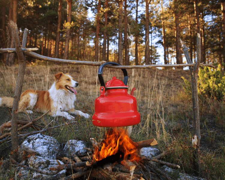 Camping With Your Pup Around South Lake Tahoe